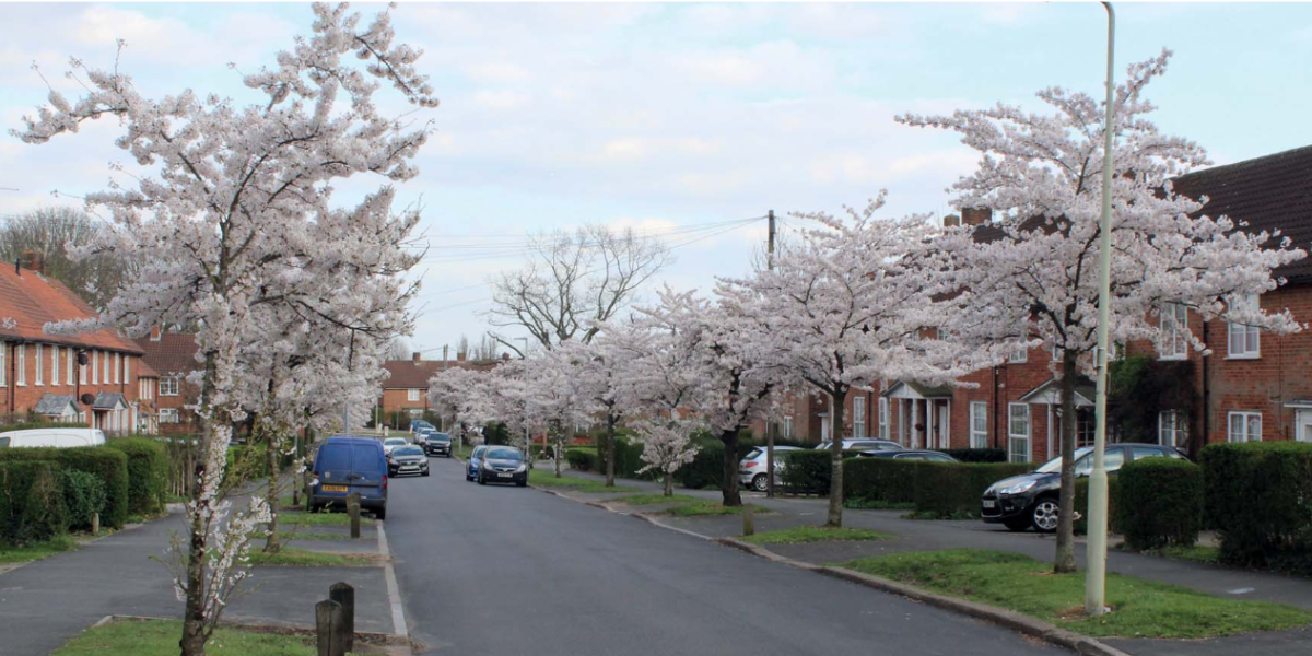 Consultation launches on Peartree conservation