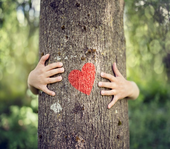 Hands wrapped around a tree with a heart.