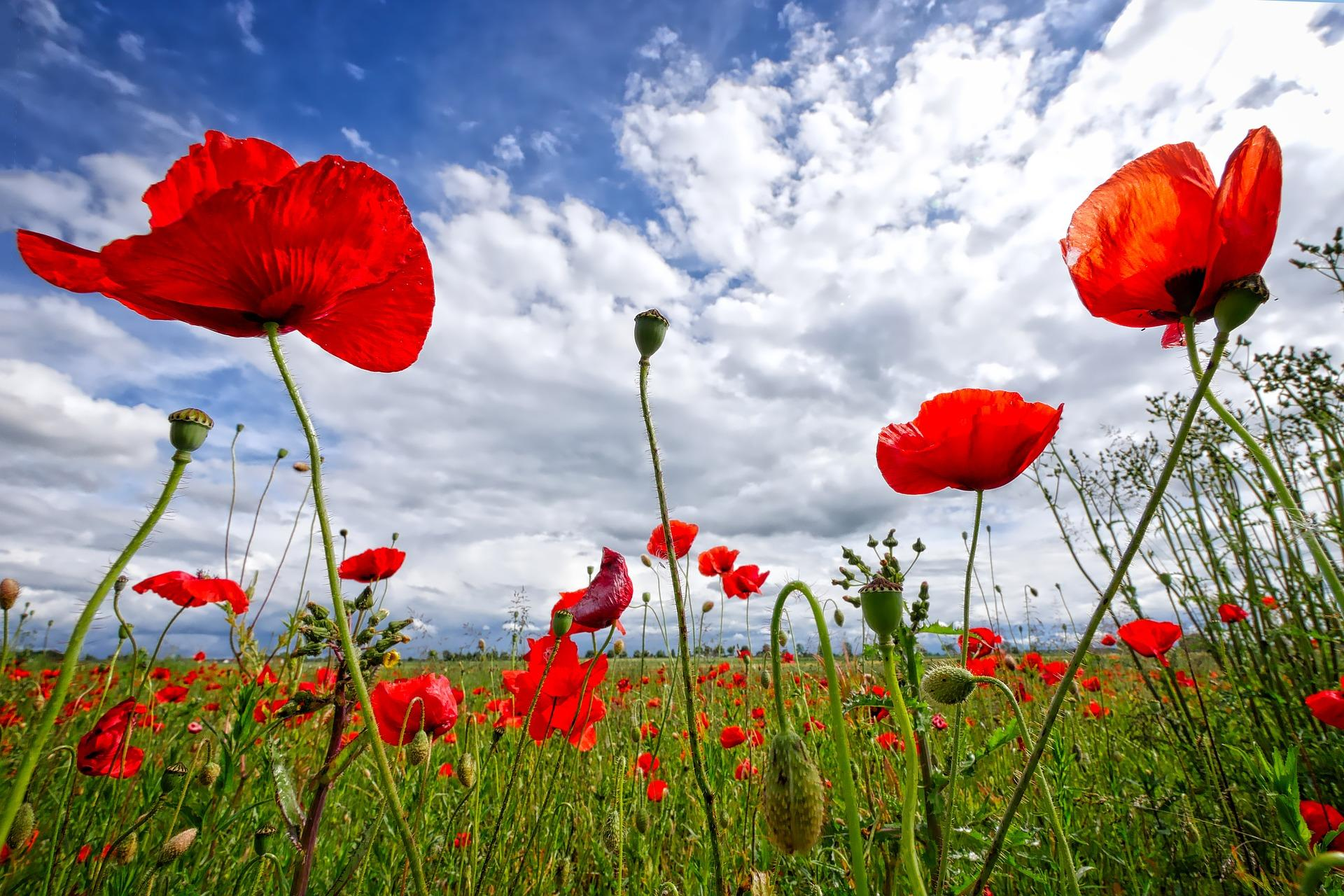 This year's Remembrance Sunday moves online